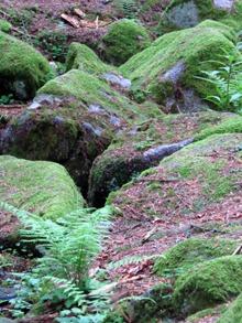 Kameny nad studánkou