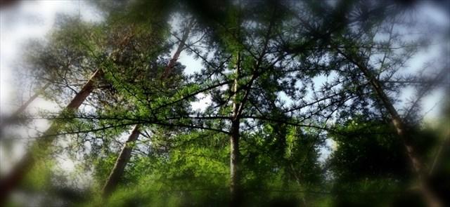 Ein paar Bilder aus dem Wald