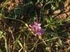 Frühlingsgefühle im Dezember log image