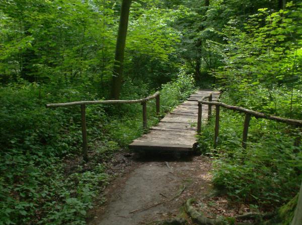 Een sfeerbeeld van het Bos van de Koppenberg
