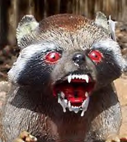 GC1CTAV Rabid Raccoon (Traditional Cache) in Ohio, United ... Raccoon With Rabies Foaming