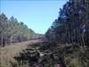 Por entre a floresta log image