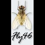 fly46