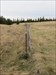 Marker post and border fence