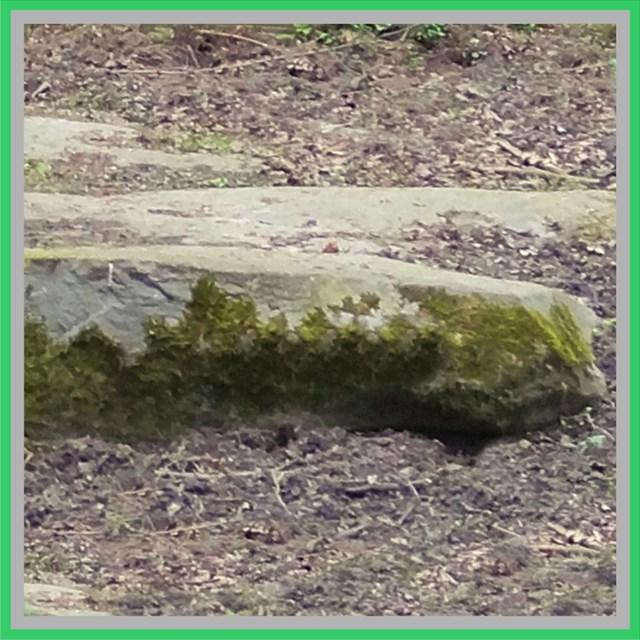 Quartzite at the Ravensberg