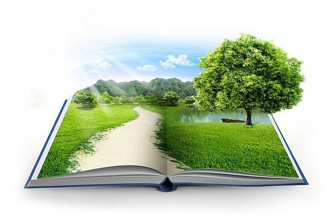 Kniha a strom