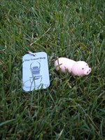 Piggy Released Into the Wild
