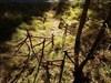 TB6YK8A Bild aus der Geocaching®-App hochgeladen