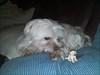 onze viervoeter met Nonnies puppy Viervoeter Hoefje heeft niet zo vaak een hondje gezien, die nog kleiner was dan zijzelf  :-)