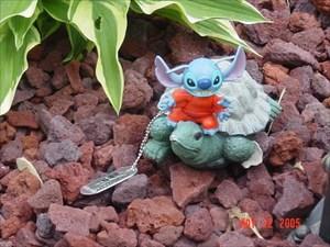 Turtle ride! Yee-haw!