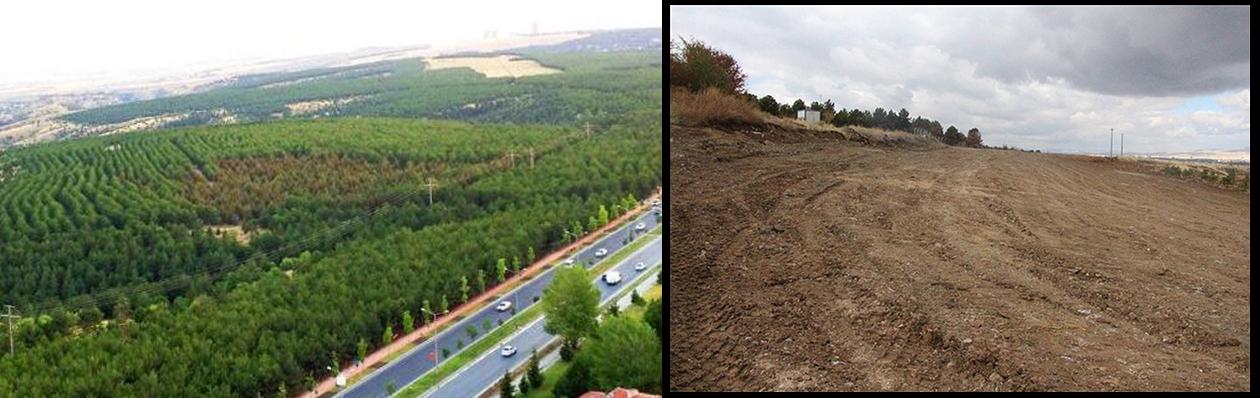 ODTÜ ormanı öncesi-sonrası / The METU forest before-after