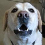 homer-dog