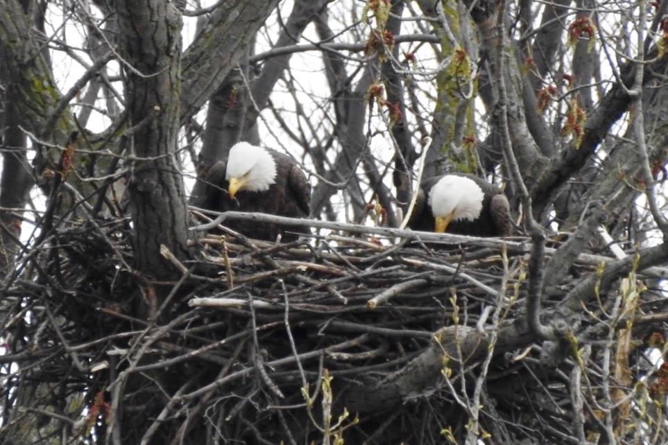Gc7474y Birds Of Ohio Series Eagle Traditional Cache In Ohio