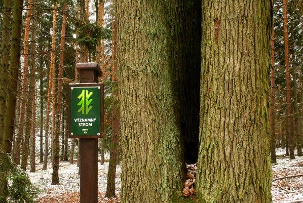 Významný strom LČR
