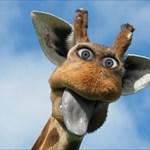 liberal giraffe