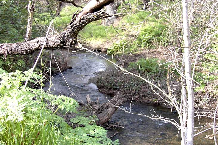 Calero Creek