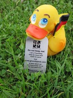 German Duck