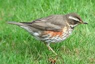 Фото 7 - Лесные птицы - Птицы леса.