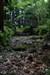 Floresta encantada - Enchanted Forest