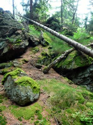Skala a padle stromy