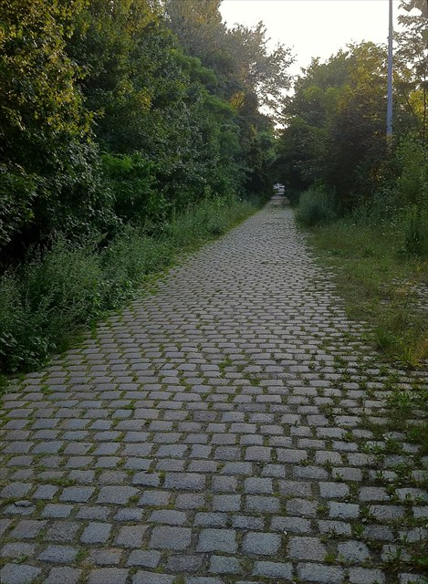 An old stone road that leads to the geocache. Photo by geocacher Ezh_gps