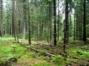 Les na vrcholu