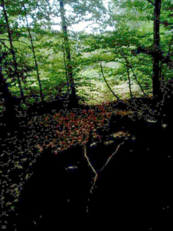 Baumstumpf guckt zum Dörfer-Blick