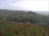Lendava - Vineyard