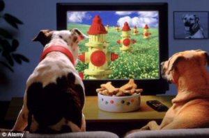 chiens devant télé 2