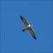 Falcão log image