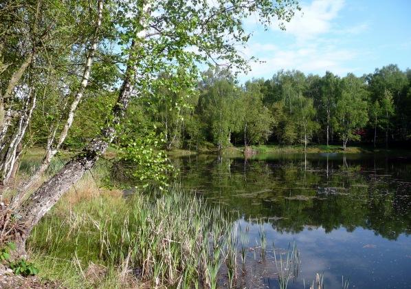 Jezero s břízou