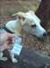 Cachehund Ada ist skeptisch