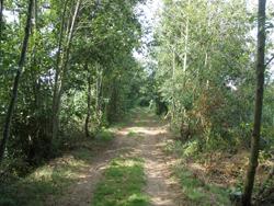 Percurso por entre as árvores