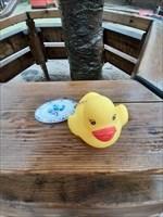 Anna the Dutch duck