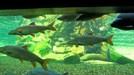 große Flossentiere