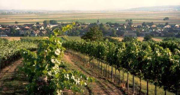 Aussicht beim Weinbeerkreuz