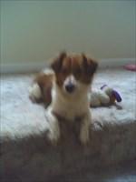 Rudy the Geo Pup