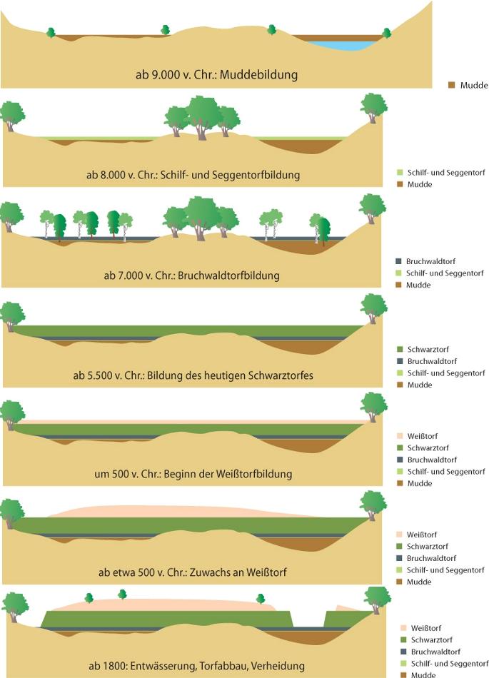 Entstehung Moor