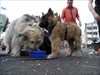 Rheinsteig#3 Hundetankstelle