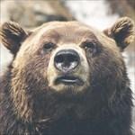 Skookum Bear