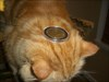 Geocoin on Cat 1