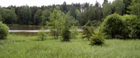 Příbřežní vegetace