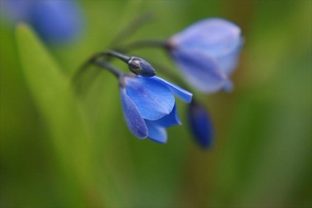 avatar de agnes.fleur