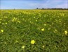 A Primavera a olhar para mim! log image