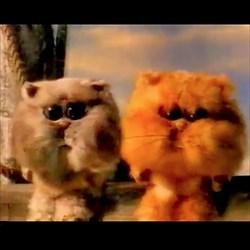 snappytomcats