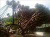 Jardim Botânico 13