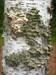 Fungus log image