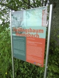 Zwillings-Bäume Hunsrück Heimat-Filme
