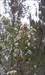 Flor log image