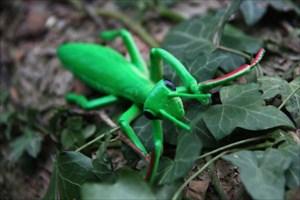 Mirjam Mantis